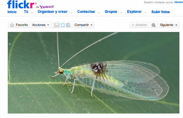 Flickr insecto