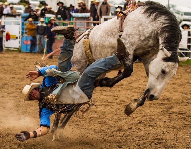 Rodeo XI - Steve_evans