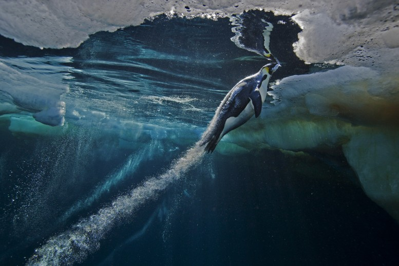 Paul Nicklen- Naturaleza