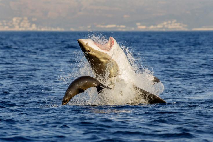 (Foto David Jenkins. Seal Island, Sudáfrica. Julio 26, 2013)