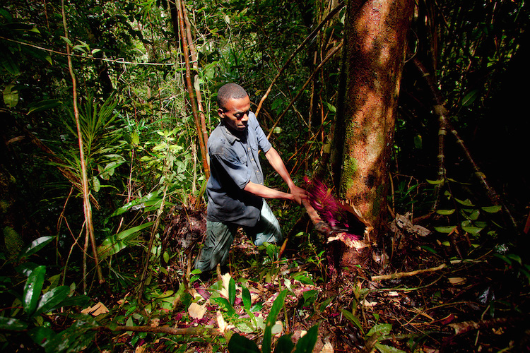 toby-smith-malagasi-worker-cutting-tree_tcm86-1294710