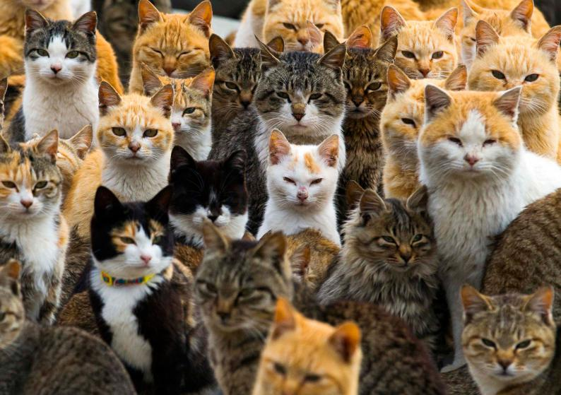 Cats crowd the harbour on Aoshima Island in the Ehime prefecture in southern Japan February 25, 2015. An army of cats rules the remote island in southern Japan, curling up in abandoned houses or strutting about in a fishing village that is overrun with felines outnumbering humans six to one. Picture taken February 25, 2015. To match story JAPAN-CATS/    REUTERS/Thomas Peter (JAPAN - Tags: SOCIETY ANIMALS TPX IMAGES OF THE DAY TRAVEL) - RTR4RUVW