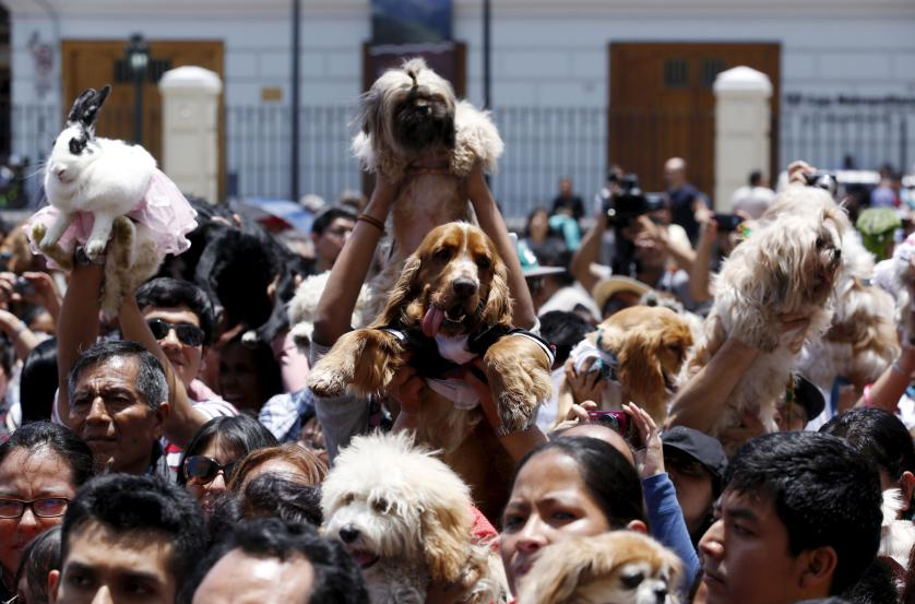 Owners holding their pets attend a religious and blessing ceremony outside the San Francisco church in Lima, October 4, 2015. Hundreds of pets get blessed during Saint Francis of Assisi festivities outside the San Francisco church in downtown Lima. REUTERS/Mariana Bazo   TPX IMAGES OF THE DAY      - RTS301I