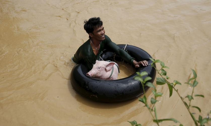 A man holds a pig on a float to cross a flooded road amidst a strong current in Sta Rosa, Nueva Ecija in northern Philippines October 19, 2015, after it was hit by Typhoon Koppu. Powerful typhoon Koppu ploughed into the northeastern Philippines before dawn on Sunday destroying homes and displacing 10,000 people and whipping up coastal surges four meters (12 feet) high, disaster agency officials said. There were no reports of casualties after the category four typhoon, with central destructive winds of 175 kph (109 mph), making landfall near the town of Casiguran in the Aurora province. REUTERS/Erik De Castro      TPX IMAGES OF THE DAY      - RTS514Q