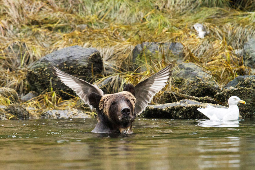 comedy-wildlife-photography-awards-shortlist-2016-30-57fb40d3a4859__880