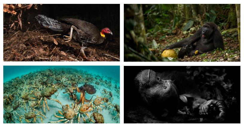 Estas son las mejores fotos de fauna silvestre de este año