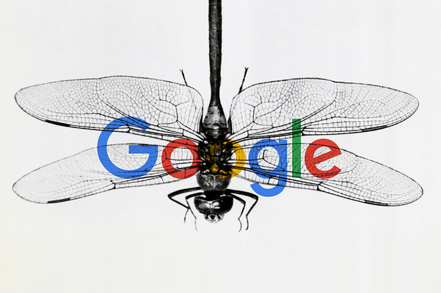 Google: ¿Por qué cientos de empleados desaprueban el desarrollo de un buscador en China?