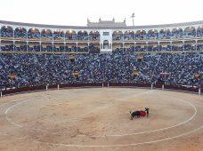 El País le informa a sus lectores que las corridas de toros no saldrán de sus páginas